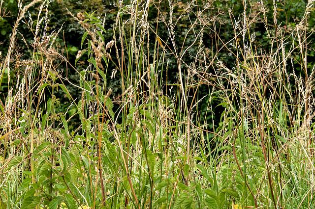Grass and Nettles, Semington