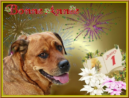 Dana vous souhaite une bonne année ! [ON EXPLORE]