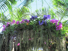 Sunshine and Orchids