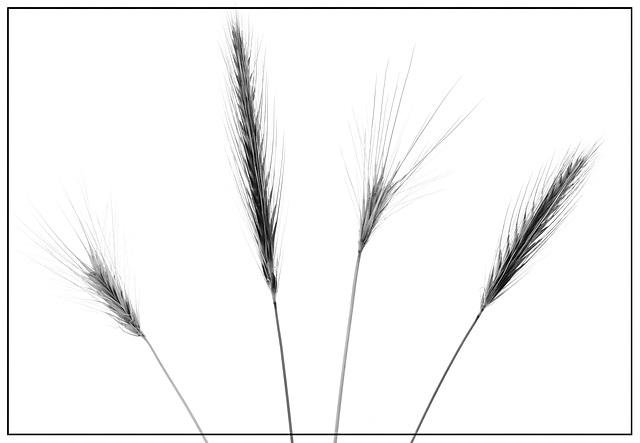 Grasses - Black and White version