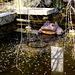 Wishing pond, Tenryu-ji