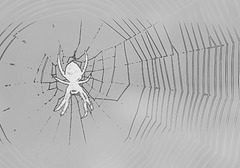 what wicked webs we weave