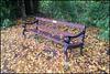 Trevor Lacey seat in autumn