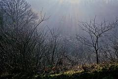 Winternebel - Winter fog