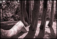 Many-trunked tree