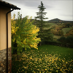 Falling leaves and a grey sky.