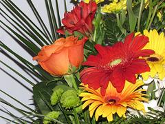 Les fleurs reviendront au Québec !