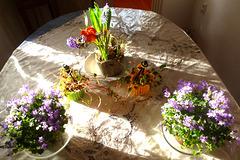 Gruß mit Blumen - saluton per floroj