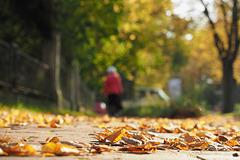 Herbst in Lübeck