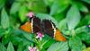 HUNAWIHR: Jardins des papillons 02