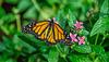 HUNAWIHR: Jardins des papillons 05