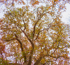 1 (33)...austria tree baum..autumn herbst