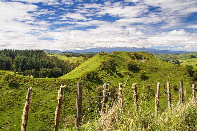 Rural NZ