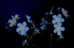 ..flower power