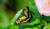HUNAWIHR: Jardins des papillons 06