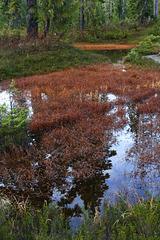 Schreiber's Meadows