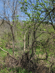 I refuse to be convinced that late April isn't the best time to see this rural Ohio Applachian plant area.