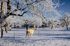 Ein frostiger Wintermorgen - A frosty winter morning