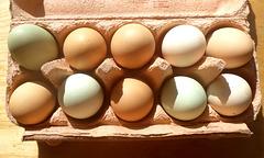 Eier von 'Grünleger' Hennen