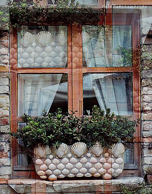 the shell window (Grado/Italy)