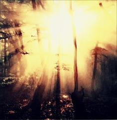 Nature en feu...