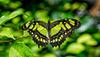 HUNAWIHR: Jardins des papillons 08
