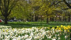 spring in Lübeck