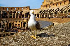 Rom - Strange Encounter inside the Colosseum