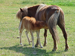 Tête-à-queue maternel