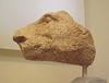 Head of a Boar from the Temple of Athena Alea in the National Archaeological Museum of Athens, May 2014
