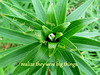 Wonders of Nature -