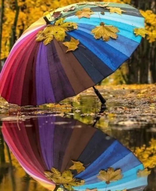 Reflets d'automne !