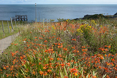 Summer colours at the sea.
