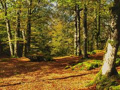 El bosque de Urbasa. Navarra.