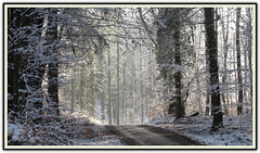 Winterwald / Winter forest ➁