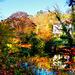 Herbstfarben am Neckar