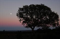 Azinheira, Quercus ilex, Penedos, twilight..