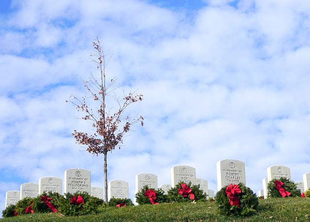 Arlington National Cemetery 7
