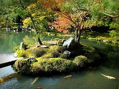 Koi pond, Tenryu-ji Zen Temple