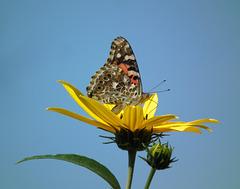 une belle dame sur une belle fleur / nice lady on a nice flower