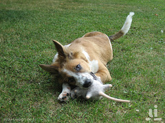 Von Hunden und Mäusen