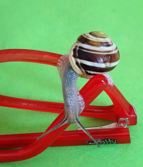 Escargot lunettes 1