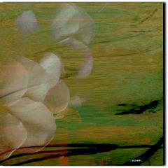 ...Blütentraum...