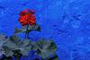 Rojo sobre azul, Convento Santa Catalina Arequipa