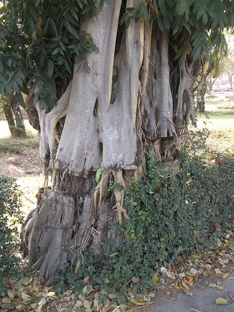 Arbre photogénique / Photogenic tree