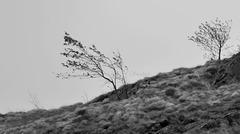 Quei giorni  perduti a rincorrere il vento...