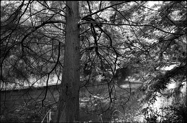 The Lake, Battersea Park.