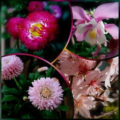 Un bouquet de printemps pour vous !