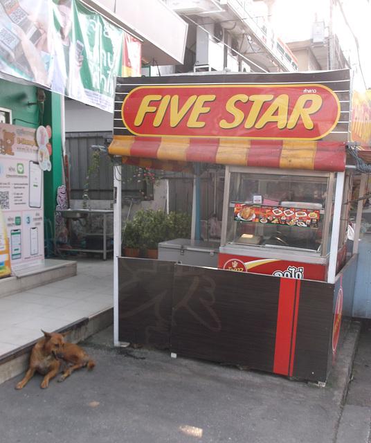 Chien 5 étoiles / Five star dog