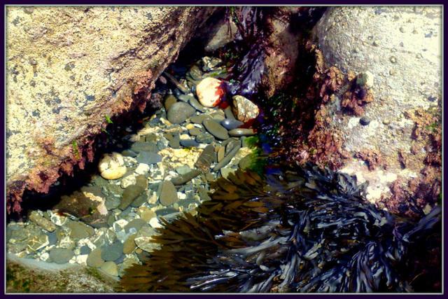 Mini rock pool, for Pam.